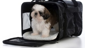 This Is What Makes the Best Pet Crate for Your Specific Dog