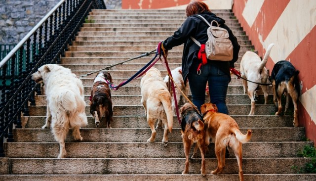 Tips On Applying For Dog Related Jobs