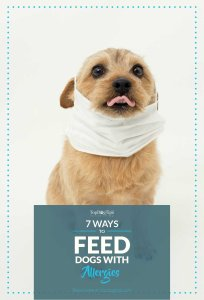Tips on How To Feed Dogs to Deal With and Prevent Allergies