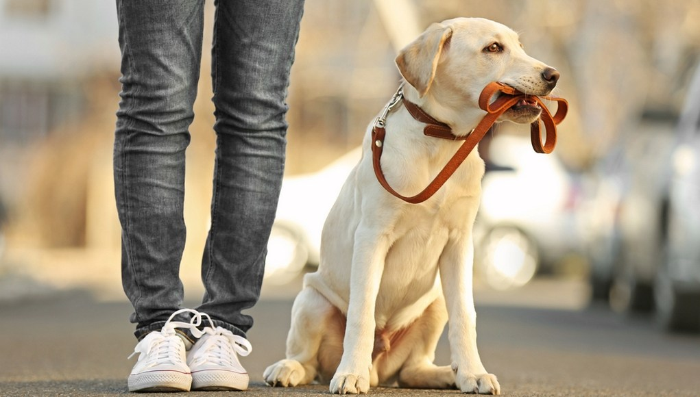 Useful Resources for A New Dog Owner