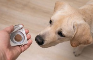 12 Best Dog Anxiety Aids for Calming