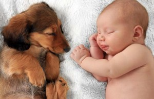 A Study Shows How Dogs May Improve Health of Young Children