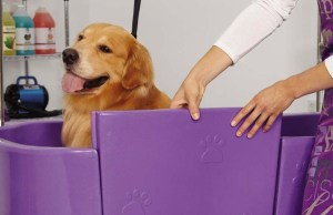 Best Dog Baths for Easier Grooming of Your Pet