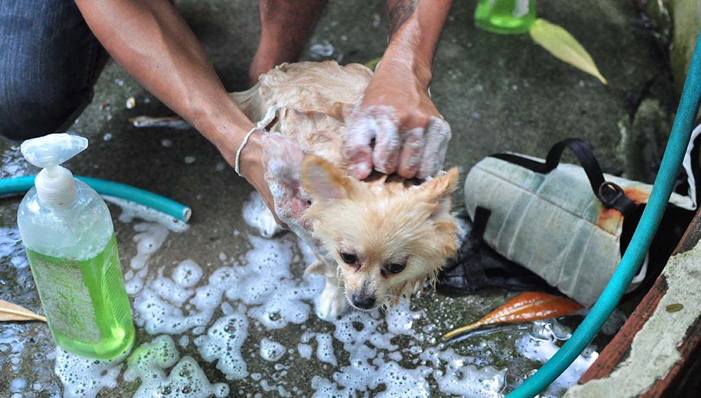 Best Medicated Dog Shampoo Brands of This Year
