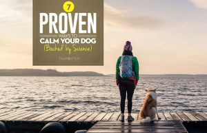 Science-based Ways on How to Calm a Dog Down