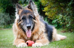 Dog Breeds That Have the Longest Lifespan