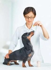 Dog anxiety medication as last resort