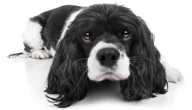 Effective Ways to Calm Down A Dog Backed By Science