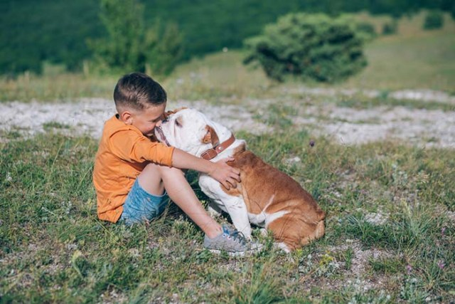 English Bulldog are the most friendly dog breeds