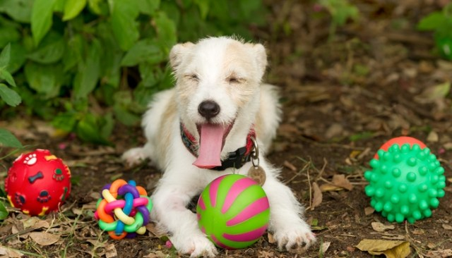 How To Choose the Right Size Dog Toys