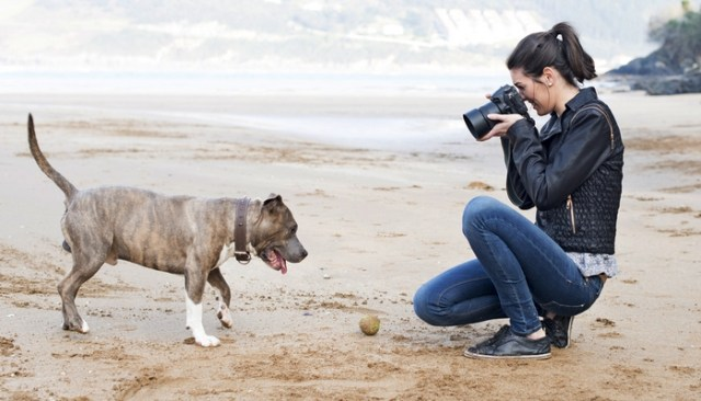 Use a motivator to Take Great Photos of A Dog