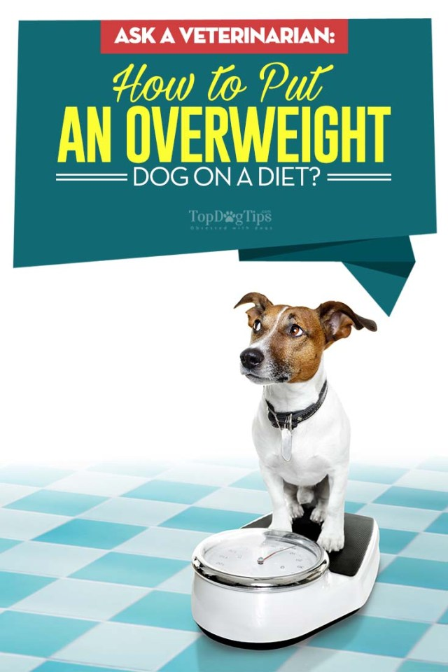 How to Put an Overweight Dog on a Diet