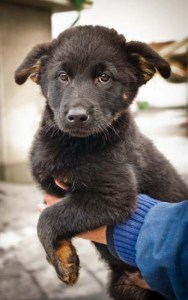 Learn About Dog Adoption Requirements