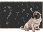 Myths That Many Dog Owners Still Believe