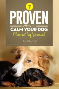 Proven Ways to Calm Down A Dog