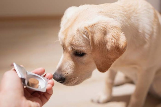 The Best Dog Anxiety Medications and Supplements
