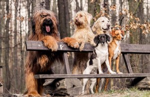 The Most Friendly Dog Breeds in the World