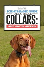 The Science-based Guide to Dog Shock Collars