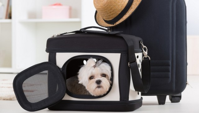 best dog crate comparison