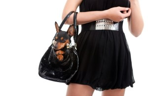 best dog purses for small dogs