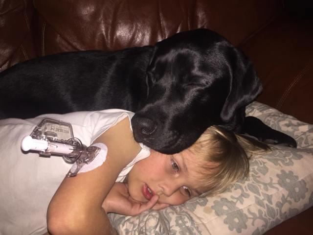 Blood Sugar Detection Dog Saves Child's Life
