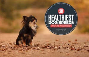 30 Healthiest Dog Breeds with Long Lifespans