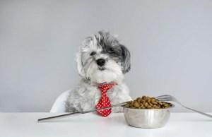 Best Dog Food for Poodles - Vet Recommended Brands