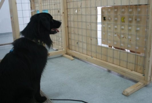 Study: Dogs Demonstrate Charity Willingly