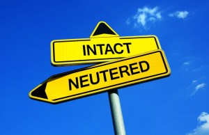 How Neutering Dogs May Lead to Cognitive Impairments