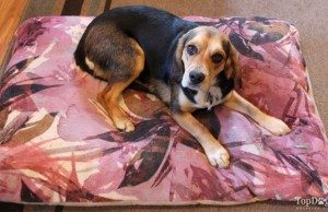 How To Choose the Perfect Dog Bed