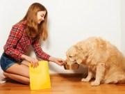 How To Feed A Golden Retriever