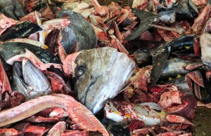 Most Dangerous Ingredients in Dog Foods