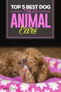 The Best Dog Treat Animal Ears