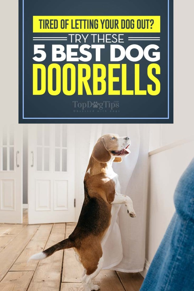 Top Rated Dog Doorbells for Housetraining in 2020