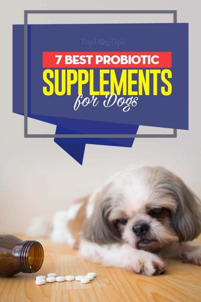 7 Top Rated Best Dog Probiotic Supplements