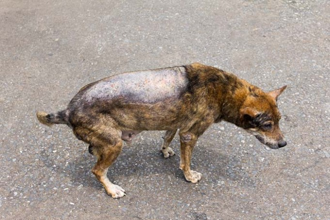 Blistering Disorder in Dogs Can Now Be Prevented