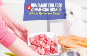 Guide on Homemade Dog Food vs Commercial Brands