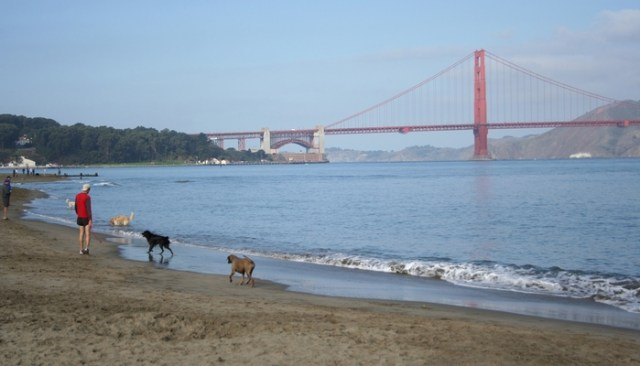 Most Dog Friendly Cities in the United States