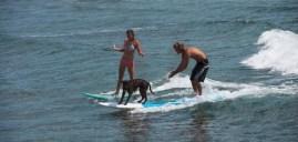 Dogs in San Diego, California