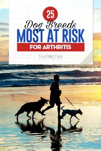 The 25 Dog Breeds Most at Risk for Arthritis