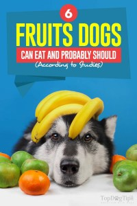 The 6 Fruits Dogs Can Eat and Probably Should (According to Scientific Studies)
