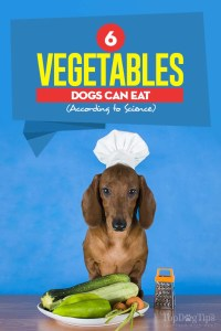 The 6 Vegetables Dogs Can Eat According to Science