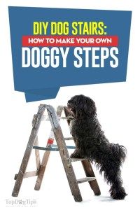 The DIY Dog Stairs Guide