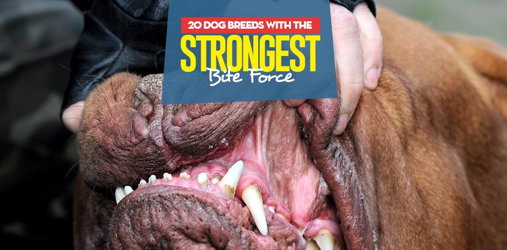 Top 20 Dog Breeds With The Strongest Bite Force