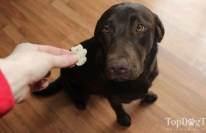 Top 5 Best Dog Dental Treats and Chews of 2020