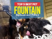 Top 5 Best Pet Fountain Replacement Filters