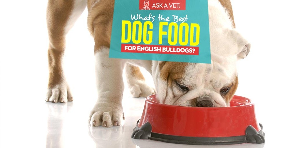 Top 6 Best Dog Foods for English Bulldogs