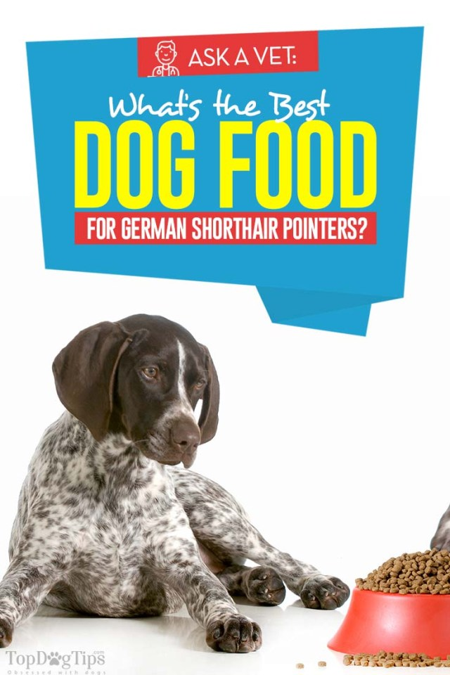 Vet Recommended Best Dog Food for German Shorthair Pointers