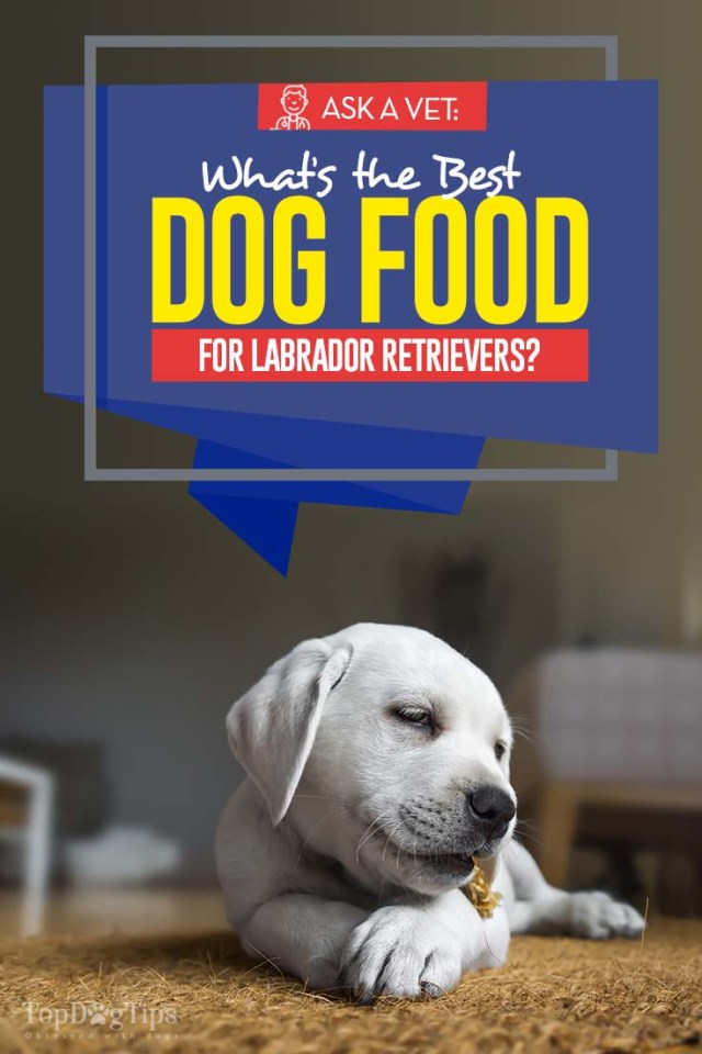 Vet Recommended Top Dog Foods for Labrador Retrievers