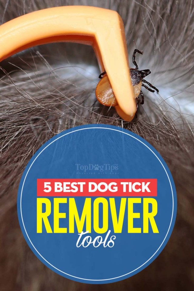 5 Top Rated Best Dog Tick Remover Tools